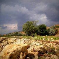 Приморский берег :: оксана косатенко