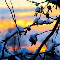 Зима. :: Виктория Чурилова