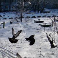Балетные па голубей :: Нина Корешкова