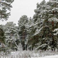 Пока еще зима 2 :: Galina