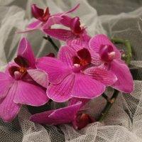 орхидея :: Оксана Романова