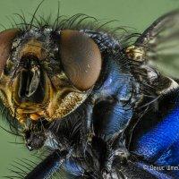 Портрет мухи :: Денис Штейн