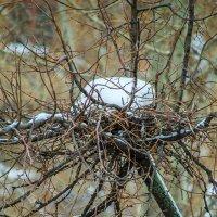 Снежное гнездо :: Игорь Герман