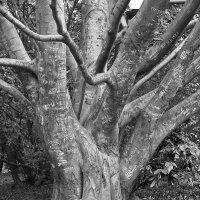 Note tree. :: Андрий Майковский
