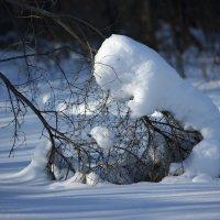 Зимняя :: Igor Babushkin