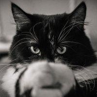 Никто не устоит перед моим взглядом :: Nastya 777