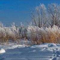 Следы на снегу :: Виктор Четошников