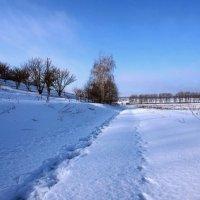 Экскурсия в Гадюкино зимой (11) :: Александр Резуненко