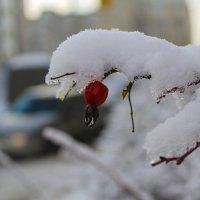 Дикая горожанка :: Ольга Мансурова