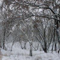 Всюду снег; кругом всё тихо; зимним сном природа спит. ( Фет ) :: Валентина ツ ღ✿ღ