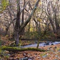 Армения. река Цав :: Айк Авагян(haykavagian)