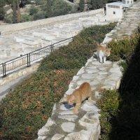 Иерусалим на Масличной горе :: Надежда
