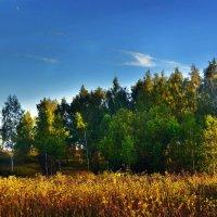 На носу - осень :: Юрий