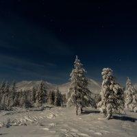 Полярная ночь в Оймяконе :: Михаил Потапов