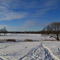 Снежный простор. :: zoja