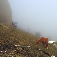 Лошадка в тумане :: Михаил Баевский