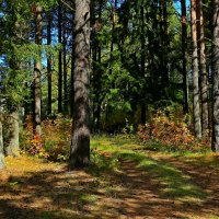 Осень в парке. :: Galina S*