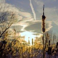 В лучах зимнего солнца.... :: Юрий Стародубцев