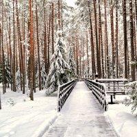В Катыньском лесу :: Милешкин Владимир Алексеевич