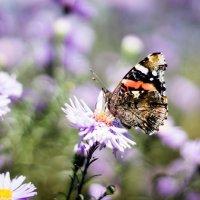 Красота природы :: Оксана Романова