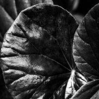 Черный лист :: Полина Ладыгина
