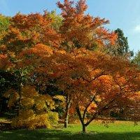 Осенние краски :: Alexander Andronik