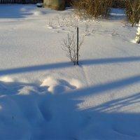 Тени   на   снегу :: Мила