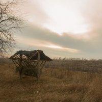 Одинокая кормушка :: Александр Анохов