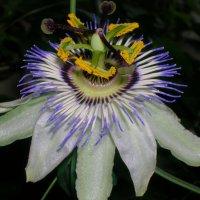 Пятиэтажный цветок :: Олег Романенко