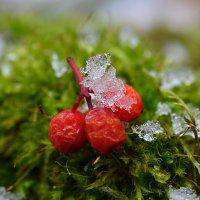 Льдинки-снежинки :: Татьяна Соловьева