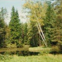 Лесной пруд :: Виктор Мухин