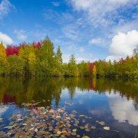 Лесное озеро :: Андрей Кузнецов