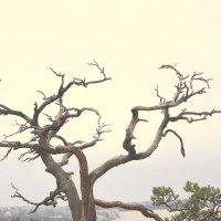 Дерево позирует :: Kris Trushnikova
