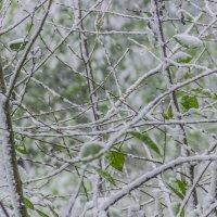 Смешались ветви, листья, звуки... :: Елена Бразис