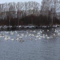 озеро Светлое(лебединое) :: Александр