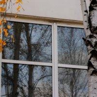 Желтые листья... :: Валерия  Полещикова