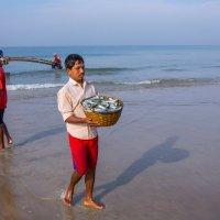 Индия .Гоа .Рыбаки вернулись. :: юрий макаров