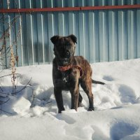 Собака :: Света Кондрашова