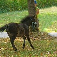 А пони тоже кони! :: Игорь Герман
