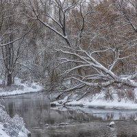 Зимняя зарисовка. Фото 9. :: Вячеслав Касаткин