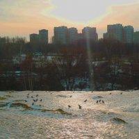 Зимний парк. :: Александр Атаулин