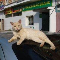 Мой банк  и машина... :: павел Труханов