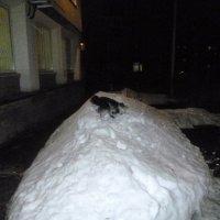 Купаемся в снегу :: Mary Коллар