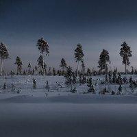 Сосны в лунном свете :: Алексей Калугин