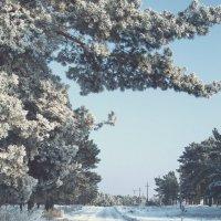 зимний лес :: СергейТроицкий