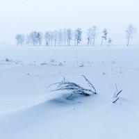Зима 2 :: Илья Любименко