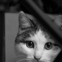 Рецидивист с невинными глазами... :: Sergey Apinis