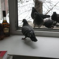 """В кризис цены растут на всё. Даже голуби интересуются: """"Что пишут новенького на этикетках?&quot :: Алекс Аро Аро"""