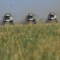 уборка урожая 2015 год :: Алексей Безуглов