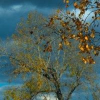 осень :: Владимир Шустов